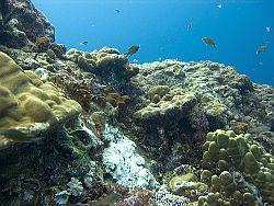 Blick auf ein Korallenriff © Dlickr / jon hanson