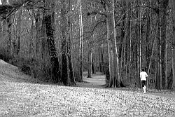 Jogger im Wald © Flickr / Robert V.
