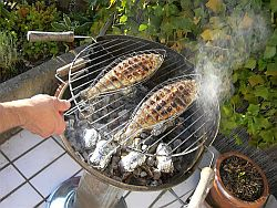 Gesünder Grillen: Tipps für Fisch, Gemüse und Obst