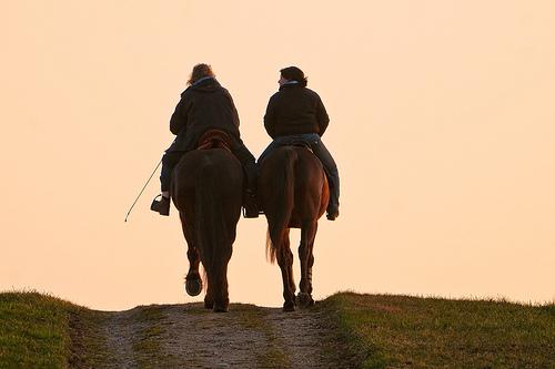 Pferd, Reiten © Flickr, Tambako the Jaguar